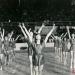 1977-05-22-festiwal-pzko-karwina-stadion-zimowy_i