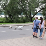 Litwa2018_0295