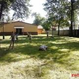 oboz Karwina SMP 1193