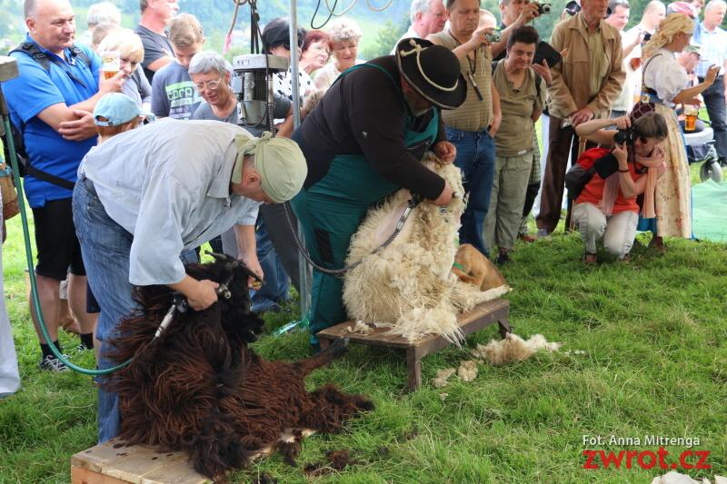 Jak się strzyże owce? (zdjęcia)