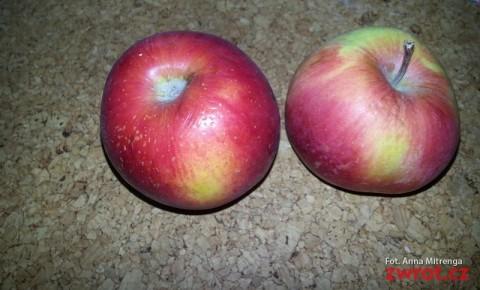 Jeszcze o jabłkach