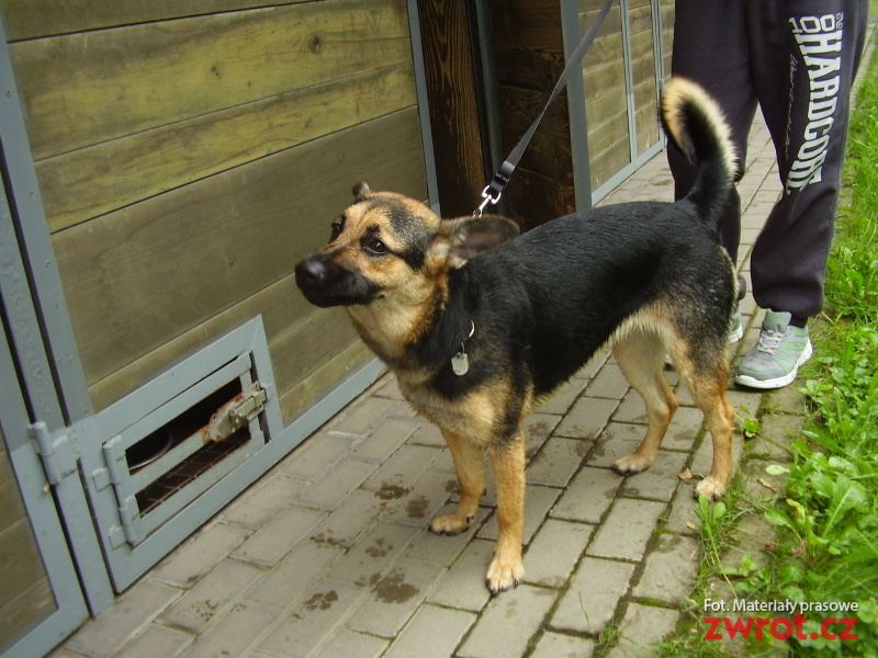 Lojza i Prokop mają nowy dom. Kolejne psy czekają na właściciela