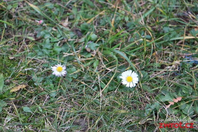Wiosna w styczniu