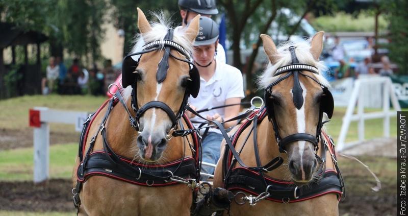 Konie, bryczki i mężczyźni
