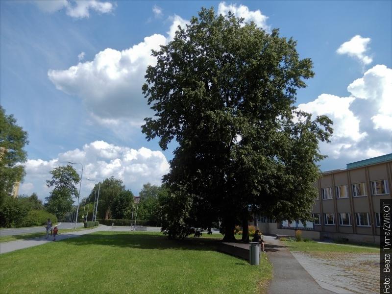 """Spacery ze """"Zwrotem"""": Drzewa przyjaźni"""