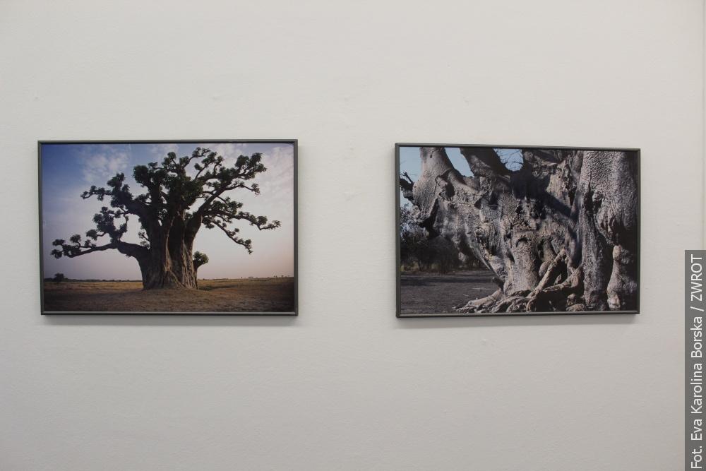 Drzewa z całego świata można oglądać w trzynieckim ratuszu