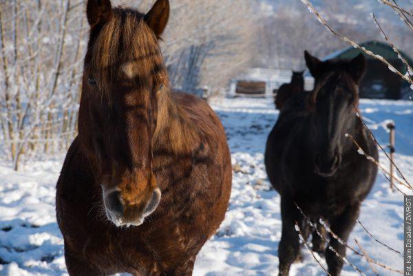Biała zima na zdjęciach Karin Dziadek