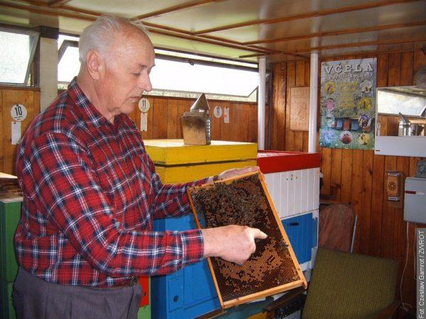 Pszczoły w służbie ludziom
