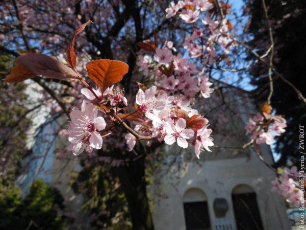 Wiosna. Kwitną kwiaty w lesie, na łące i w ogrodzie