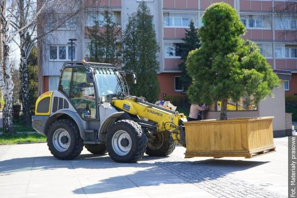 Nowa zieleń upiększa jeden z karwińskich placów miejskich