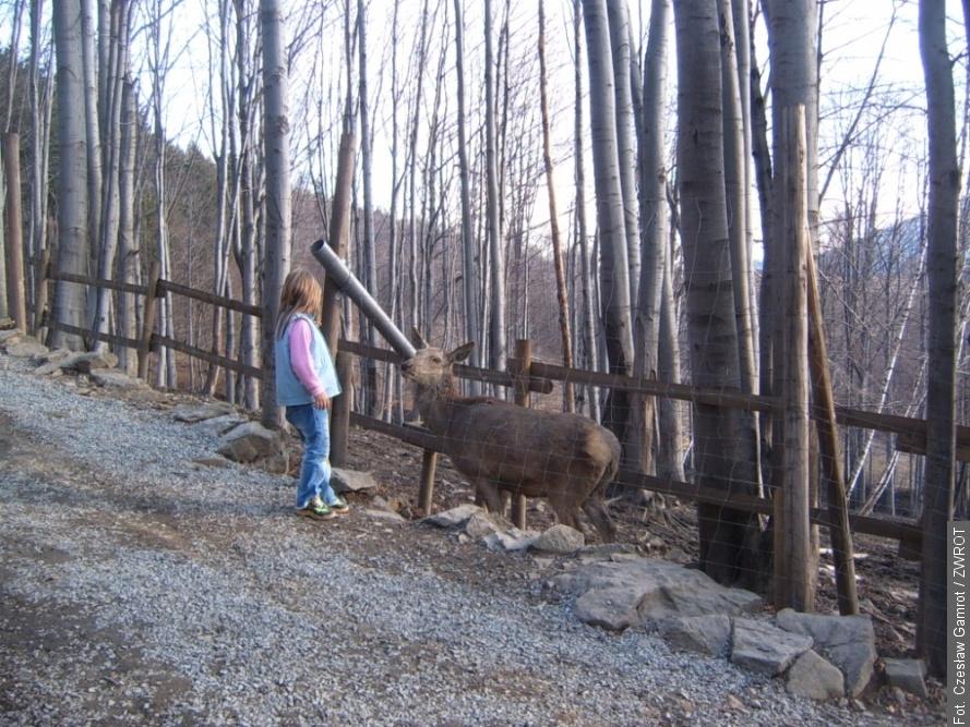 Leśny Park Niespodzianek jest już dostępny dla turystów