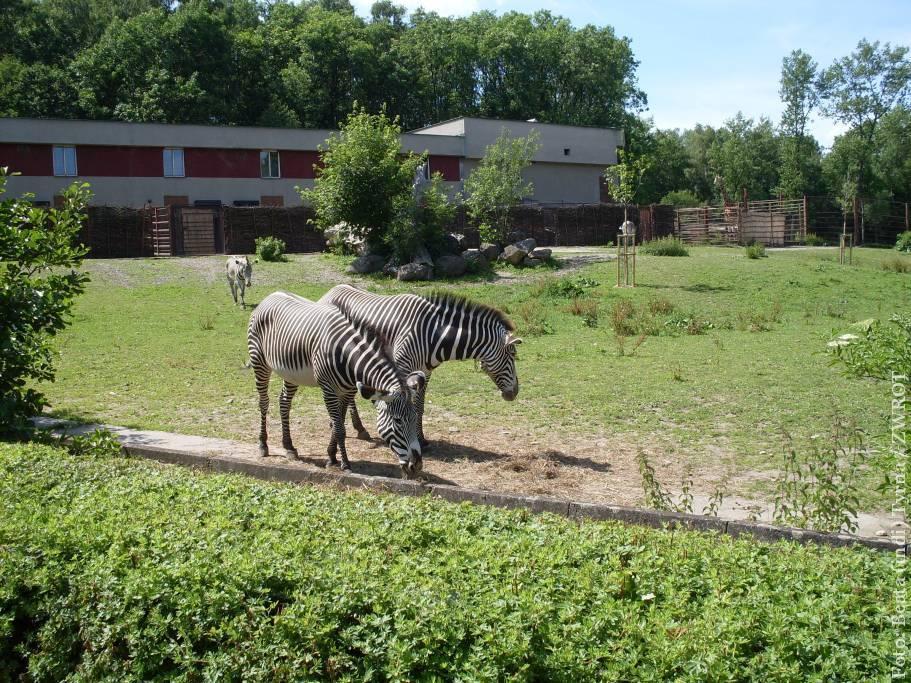 We wrześniu oraz październiku do zoo w Ostrawie za darmo!