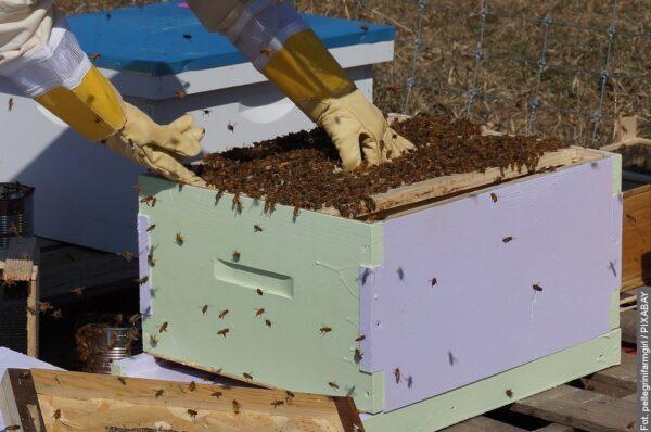Stonawa wesprze finansowo pszczelarzy