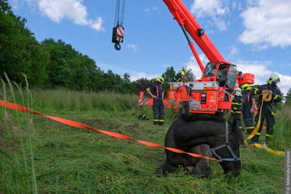 Strażacy uratowali konia, który wpadł do wąskiego dołu
