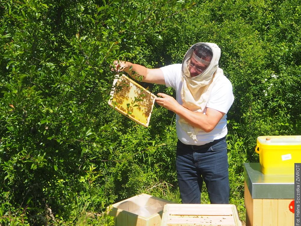 Składowisko odpadów teraz jest domem dla pszczół