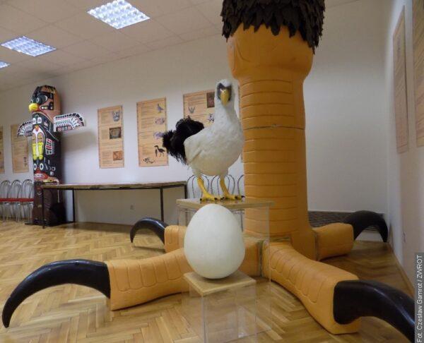 W muzeum można podziwiać świat ptaków
