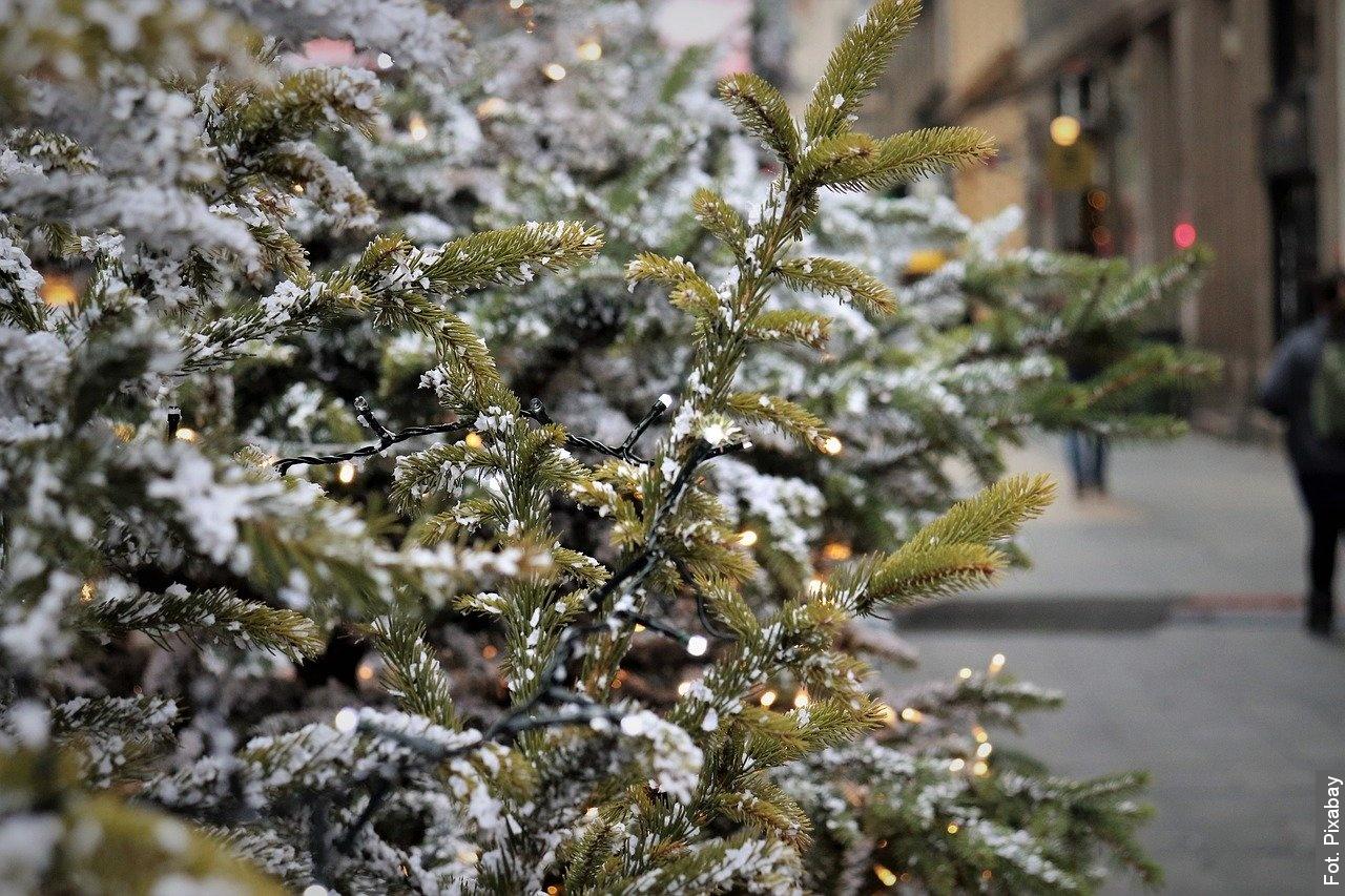 Hawierzów poszukuje choinek, które ozdobią miasto w okresie świątecznym