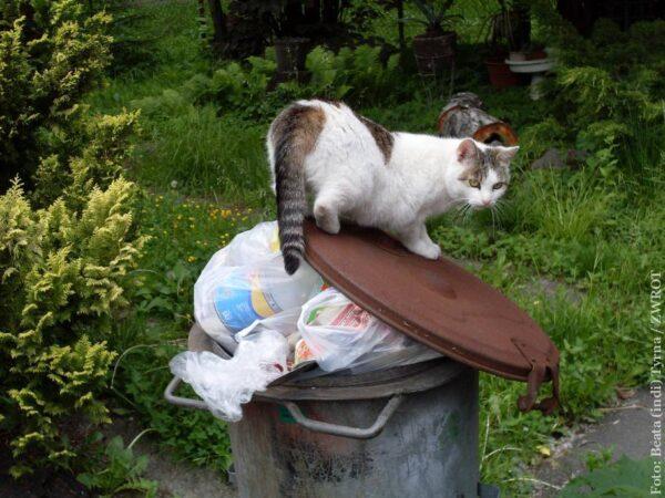 Wolno żyjące koty w Hawierzowie są bezpieczne