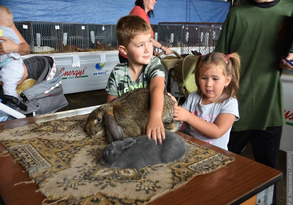 Kury, króliki i ptaki egzotyczne prezentowały swoje wdzięki w Jabłonkowie