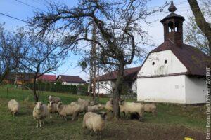 Spacery ze Zwrotem: Kapliczka – Dzwonnica w  Toszonowicach Górnych