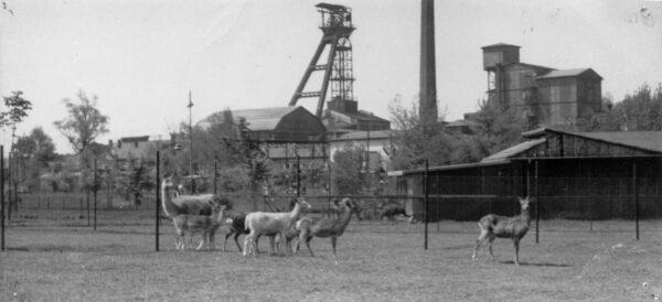 70 lat temu powstał Ogród Zoologiczny w Ostrawie