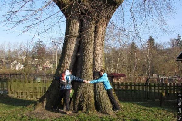 Można już zgłaszać kandydatury na Drzewo Roku