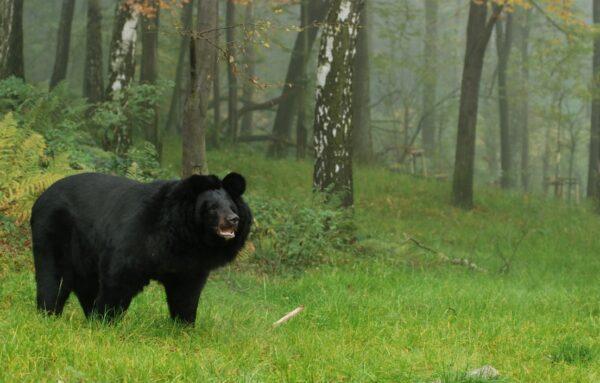 Zoo w Ostrawie zaprasza od dzisiaj