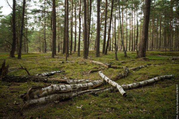 Wydmami, lasami bażynowymi i przez Osadę Latarników
