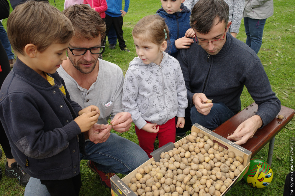 Święto z ziemniakiem w roli głównej
