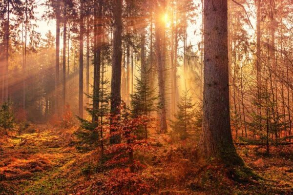 Dziś początek astronomicznej jesieni